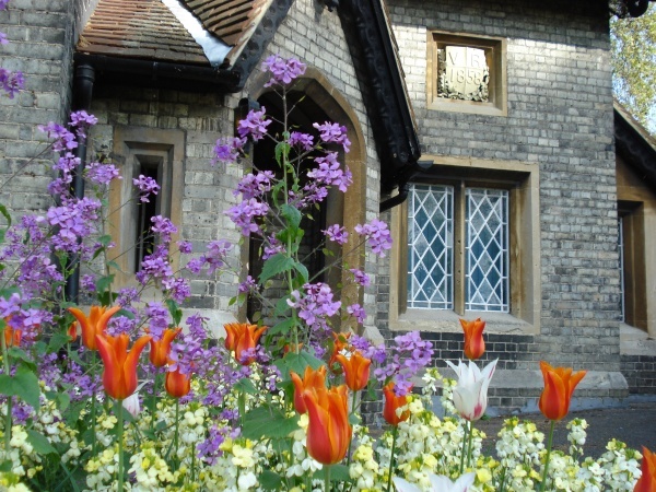 Cottage & tulips