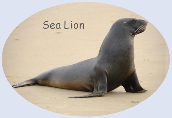 Seal post 1
