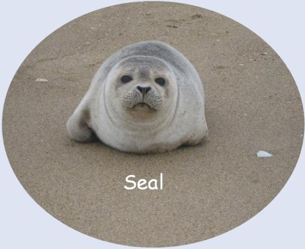 Seal post 2