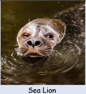 Seal post 4