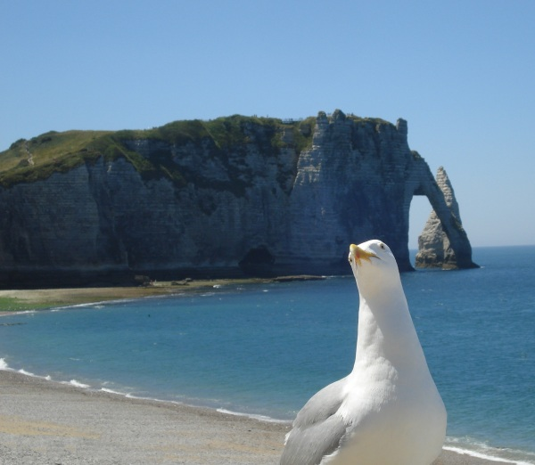 seagull at cliffs 2