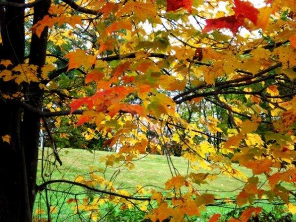 fall 5