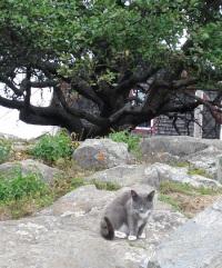 monhegan-cat