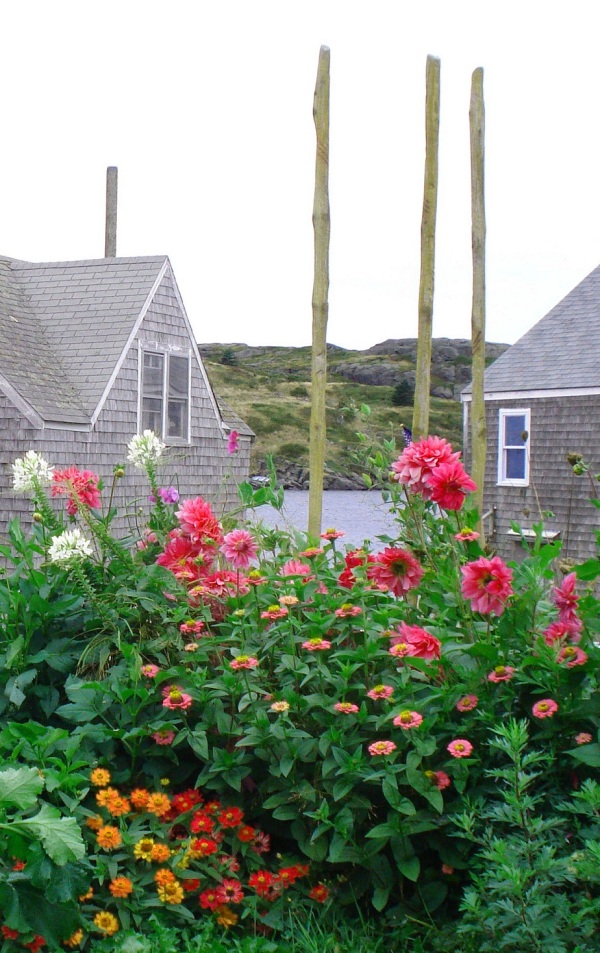 monhegan-flowers-2-copy