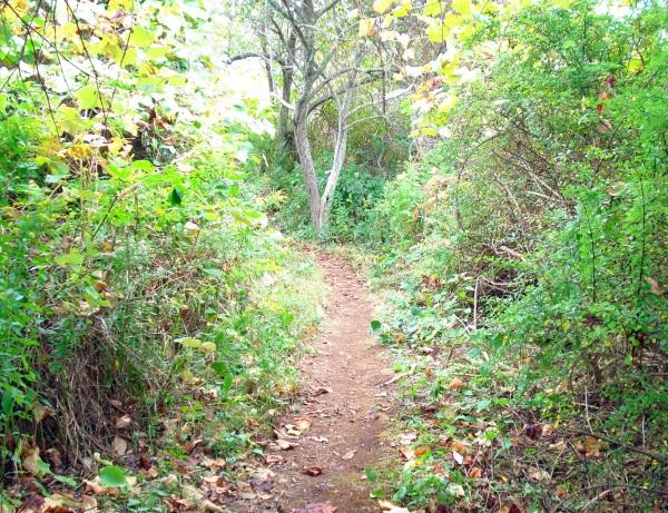 monhegan-trail-2
